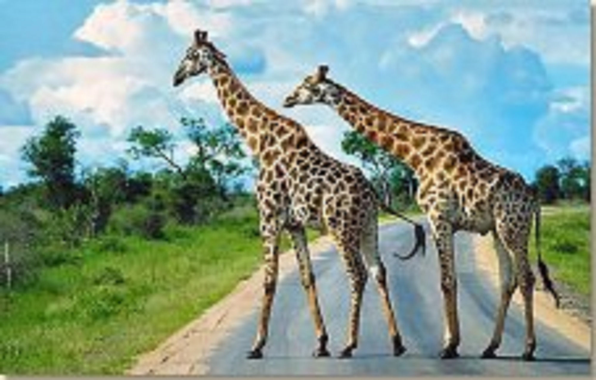 South African safaris in the Kruger National Park